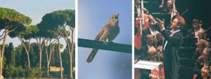 The nightingale song that ruffled feathers in 'Pines of Rome'